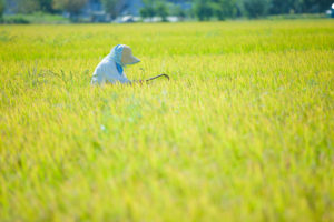 お客様の声 北陸営業所① 米農家 様